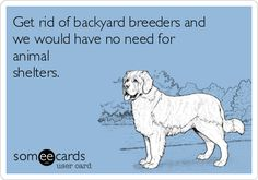 Some questions on backyard breeders and the AKC?