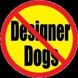 Nodesignerdogs-2-medium-init-